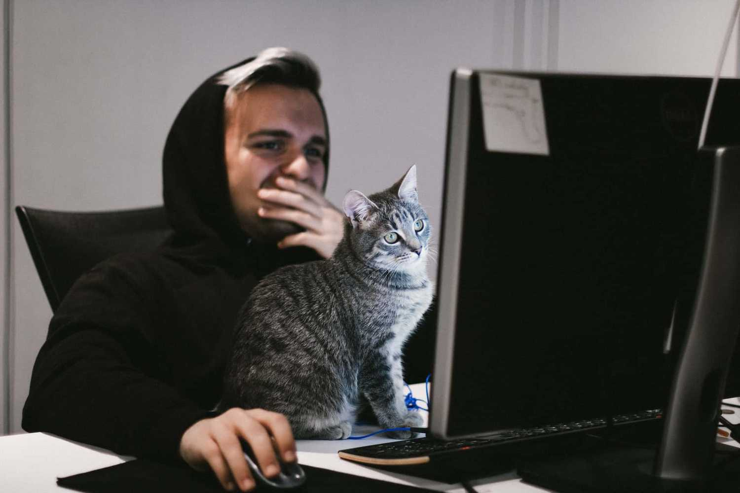 Person with cat sitting on top of desk at computer
